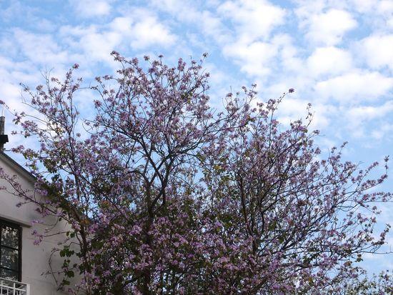 Flowers and sky Flowers Petals Tree Sky Cloud - Sky Blooming In Bloom