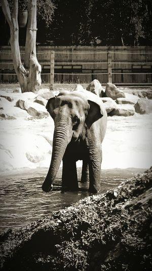 Elephant Mammal Outdoors Animal Themes Sunny Day 🌞 Baby Elephant Water Play Secondeyeemphoto Animal Photography