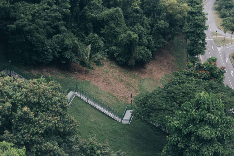 Some place to peace in the deep garden Plant Tree Green Color Growth Nature No People Day Foliage Lush Foliage High Angle View Beauty In Nature Tranquility Outdoors Architecture Land Forest Built Structure Scenics - Nature Tranquil Scene Road