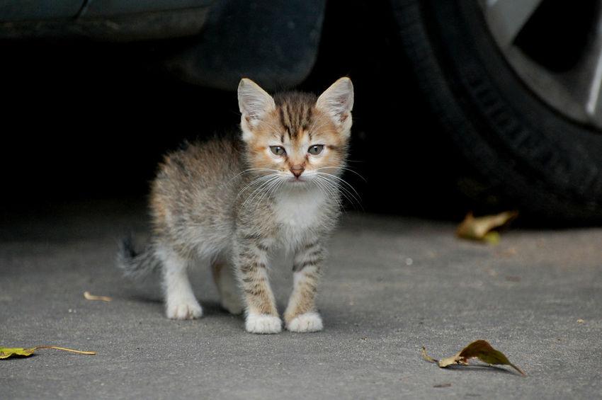 Homeless kitten on the street Alertness Animal Eye Animal Head  Animal Themes Cat Home Homeless Cats Kitten Outdoors Portrait Staring Street