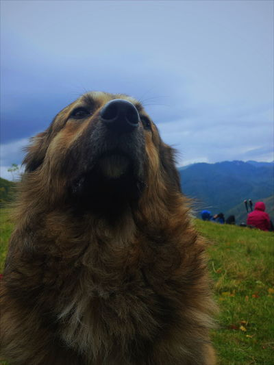 Dog Friend Mountain Beautiful Colors Trip Photo Landscape Romania Looking