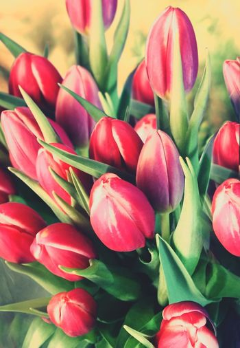 Just some tulips. Plants Nature Flowers Spring Into Spring Spring Fresh Outdoors Sunshine Coral By Motorola