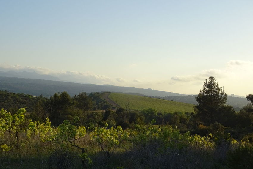 Tree Sky Montagne Ciel Arbres Mountain