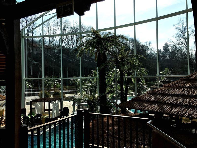 Sky Palm Tree Pool Time Indoors