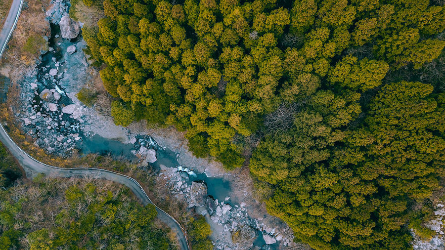// nature from above // Japan Wanderlust Travel Destinations Nature Drone  Aerial View Green Color Greenery Beauty In Nature Tree Plant No People High Angle View Water Day Non-urban Scene Scenics - Nature Growth Yellow Outdoors Environment Tranquility Autumn Tranquil Scene Flowing Water