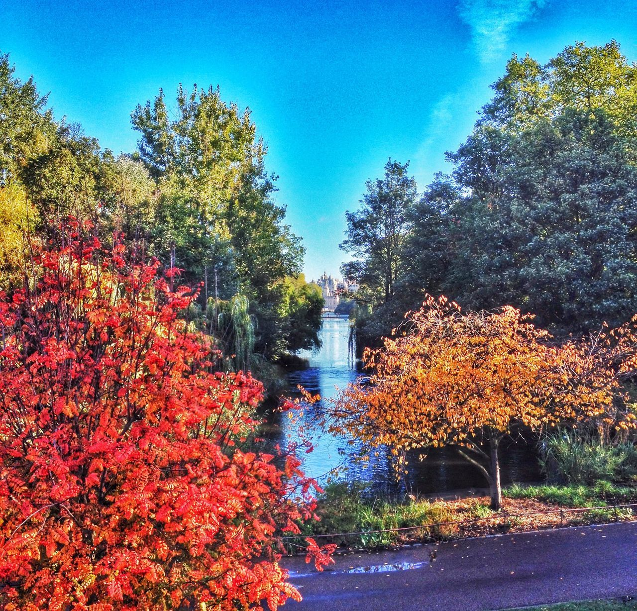 tree, autumn, growth, change, nature, beauty in nature, tranquility, outdoors, no people, plant, flower, day, sky