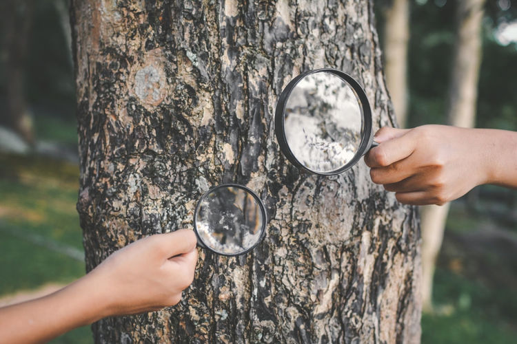 Cropped Hands Of People Holding Magnifying Glass Over Tree In Forest