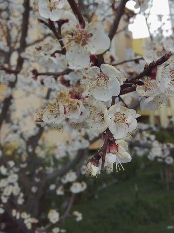 Hello Spring Spring Flowers Temizhava Hi! Peaceful Goodmorning EyeEm  Günaydın Bahardalı🌸🌸😇