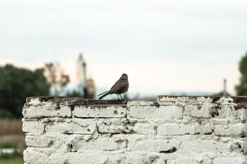 Bird perching on retaining wall against sky