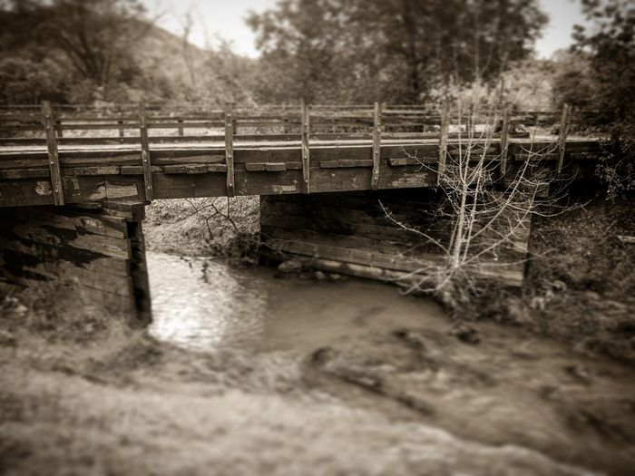 Across the Calm Water Surface Level Nature Tree Bridge - Man Made Structure Outdoors Day No People Beauty In Nature Sepia Sepia Toned Sepiaphoto Weather Beaten Ruinous Dilapitated Atmospheric Mood Dilapidation Built Structure Bridge Bridge Photography