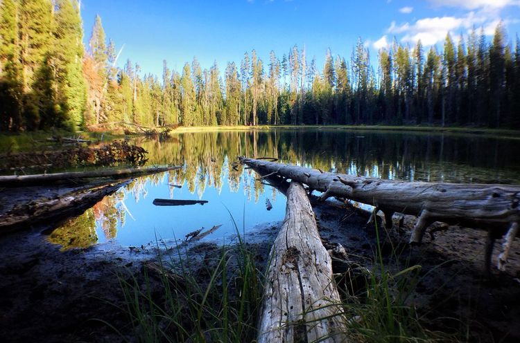 Teal Lake Tree Water Blue Tranquil Scene Scenics Reflection Nature Tranquility Growth Sky Non-urban Scene Beauty In Nature Day Standing Water Outdoors WoodLand Green Color Bright Remote No People