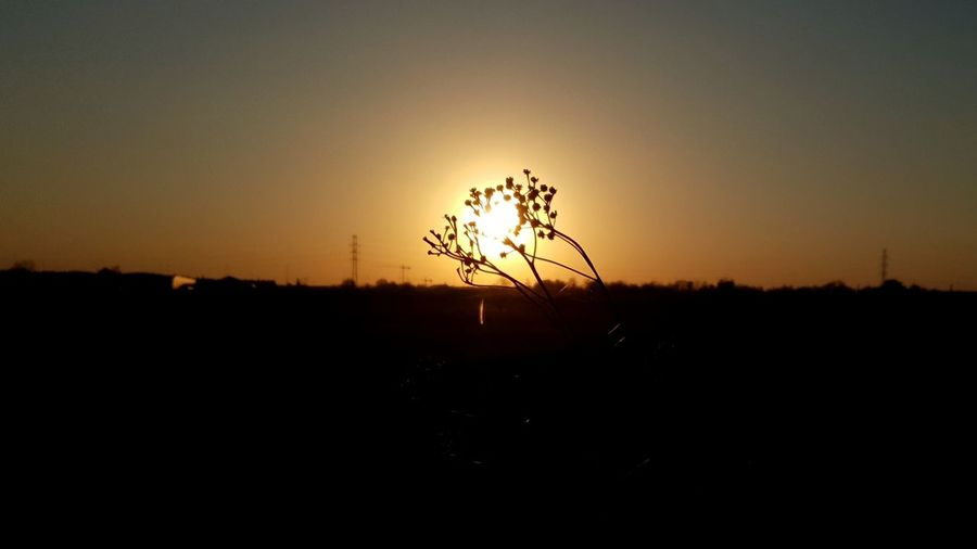 Sunset Tree Silhouette Sun Sunlight Field Sky Landscape Plant