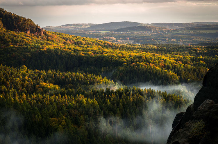 Autumn Colors EyeEm Best Shots EyeEm Nature Lover EyeEm Gallery Rock Formation The Week On EyeEm Trees Beauty In Nature Clouds Forest High Angle View Landscape Mountain Nature Outdoors Saxony Saxony Switzerland Scenics Tranquil Scene Travel Destinations Tree Betterlandscapes
