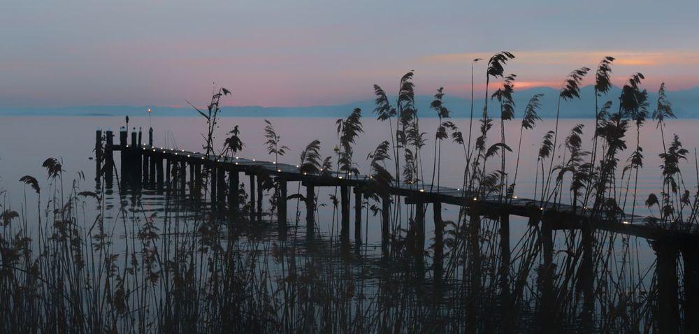 pontile Italy Lake Garda Pinklake Lagoon Water Pink Bird Sunset Flamingo Sky Landscape Horizon Over Water