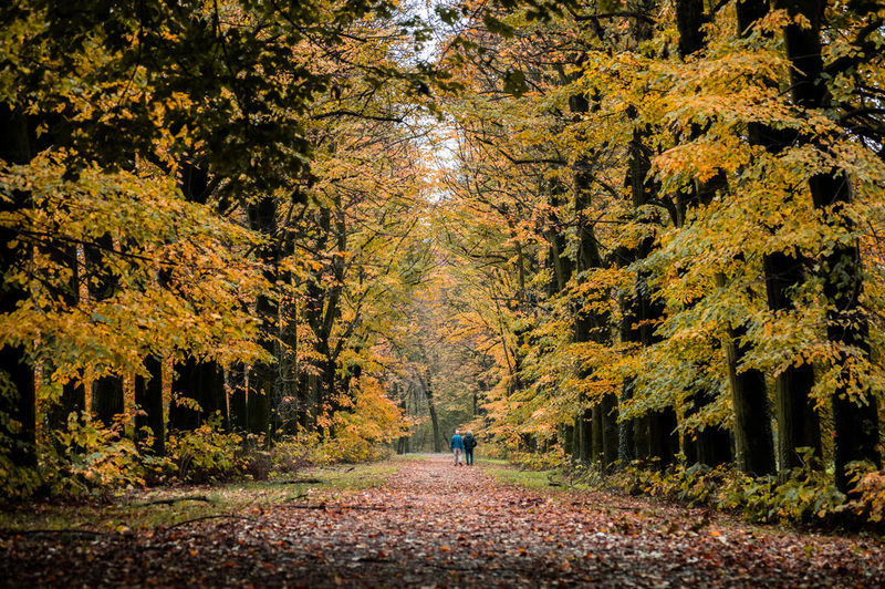People walking on footpath amidst autumn trees in forest