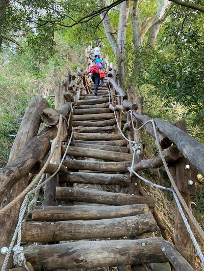 Walking Trail Dakeng Hiking Walkingtrail Staircase Steps And Staircases Plant The Way Forward Tree Architecture Men Nature Moving Up Outdoors Climbing It's About The Journey Moments Of Happiness