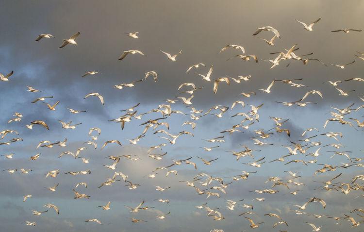 Flights Flock Of Birds Bird And Beach Bird And Beach Scape Nature Storm Clouds With Birds Sunlit Birds Water