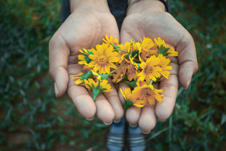 Close-up of hand holding yellow flowering plant