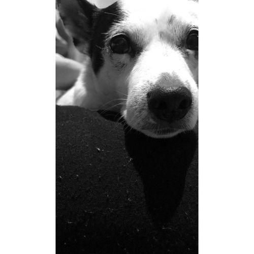 Dog. First Eyeem Photo