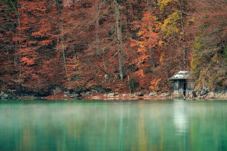 Alpsee lake against trees
