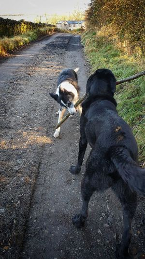 Dogs sharing