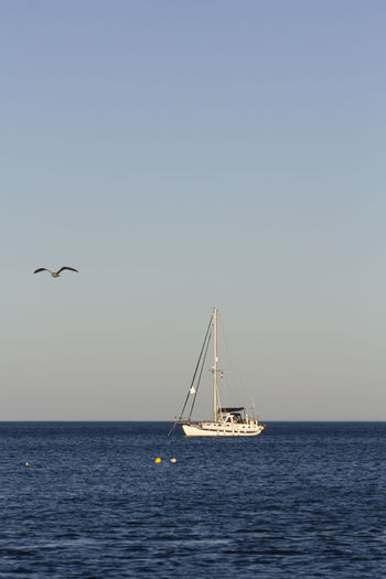 View of sailboat in sea against clear sky