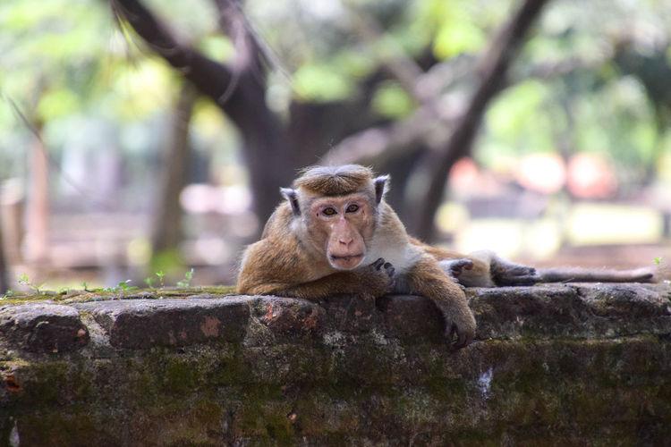 Chilling monkey Animal Close-up Animal Wildlife Monkey Wall Chilling
