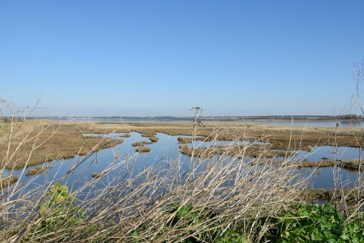 Scenics - Nature Water Nature Landscape Tranquil Scene Outdoors Wetland Marsh Grass Plant Estuary Tranquility Empty Deserted