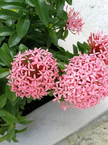 Spike Flower Green Flower Pink Color Beauty In Nature Nature Plant Growth Petal Leaf Flower Head Outdoors Day Springtime No People Close-up Freshness Fragility