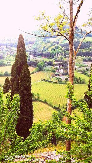 relax Montalcino.