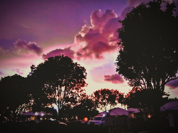 Tree Multi Colored Sunset Silhouette Sky Cloud - Sky Purple Color Magenta Storm Cloud Sky Only Dramatic Sky