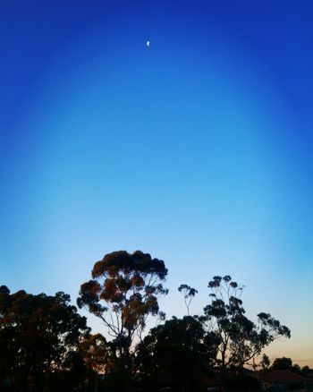 Tree Blue Low Angle View Silhouette Sky Nature Moon No People Outdoors Beauty In Nature Clear Sky Day Astronomy EyeEm Nature Lover Best Photos Newest Talent