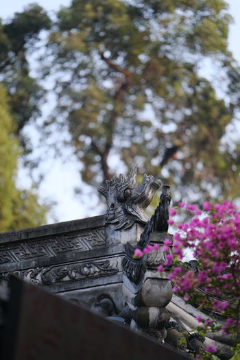 三角梅 Flower Tree