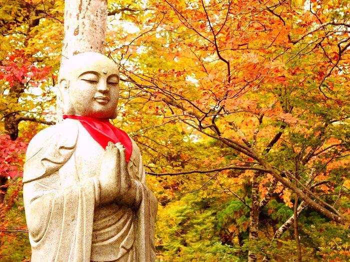 Japan Tottori Mt.Daisen Jizo Autumn Leaves 紅葉 大山寺にて撮影
