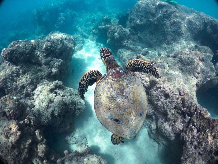 Simplicity. Underwater Sea Life Animals In The Wild UnderSea Animal Wildlife Sea Turtle Sea Turtle Nature Water Coral Beauty In Nature EyeEmNewHere Overunder EyeEm Best Shots EyeEm Nature Lover Eye4photography  EyeEm Gallery