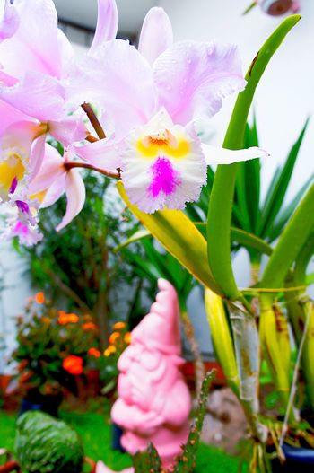 Pink gnomo philosophizing about the beautiful flowers and life in this yard☺️💕 EyeEm Gallery Magical Beauty In Nature Flower Freshness Green Fantasy Yard Cattleya Orange Color Fuchsia Gnomo Laviniafenton Bird EyeEm Nature Lover Weekend