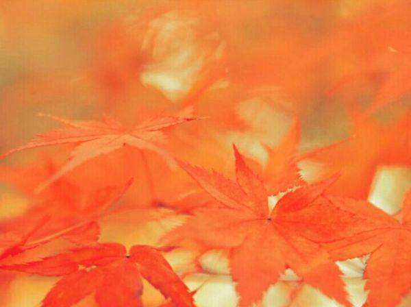 Steal march on my darling 2015.11.01 Autumn Autumn Colors Autumn Leaves Bokeh Love Bokeh Photography Bokeh Oldlens Industar61