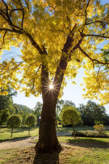 Autumn EyeEm Best Shots EyeEm Nature Lover Golden Sachsen-Anhalt Sonnenschein  Sonnenstrahlen Tree Wernigerode Baum Blue Sky Germany Lustgarten Park Sun Yellow