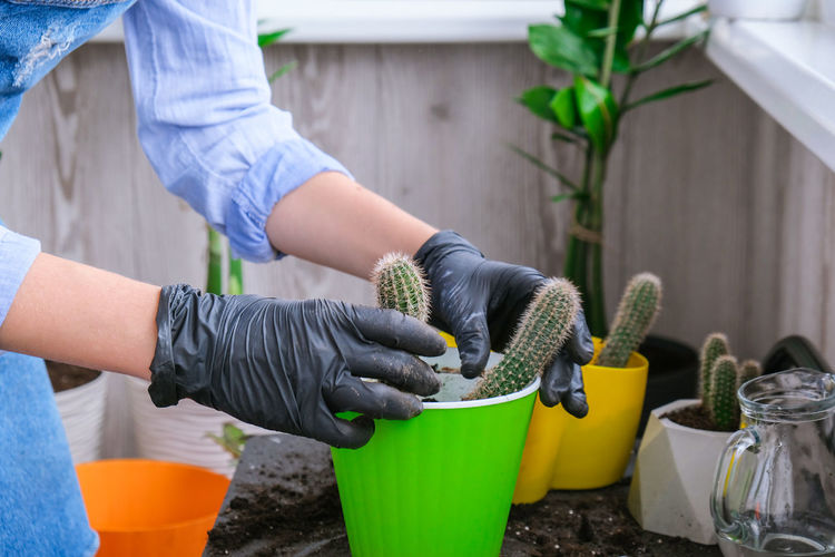 Midsection of woman working on potted plant