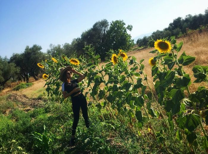 🌻🌻 Agriculture Flower Tree Full Length Field Sky Plant