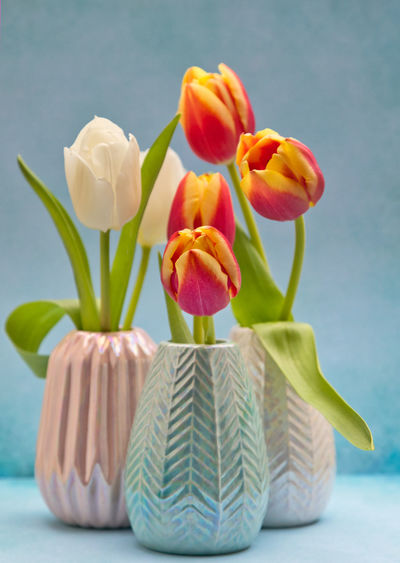 Tulip Flowering Plant Flower Plant Beauty In Nature Vulnerability  Freshness Fragility Close-up Nature No People Inflorescence Flower Head Indoors  Petal Still Life Vase Tulip Table Green Color Growth Springtime Flower Arrangement Blue Background EyeEm Gallery StillLifePhotography