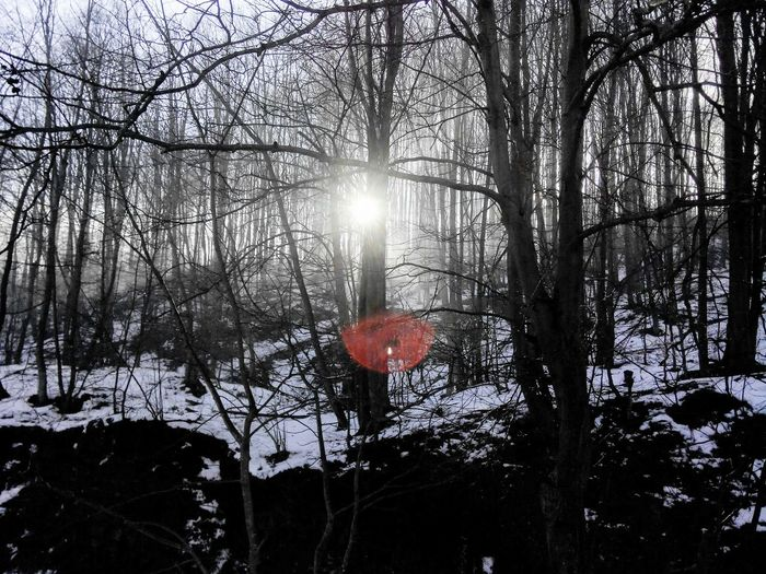 Tree Nature Forest Sun Winter Beauty In Nature Outdoors