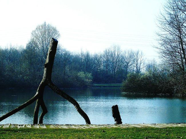 What I Value Milano Bosco Parco Boscoincitta Milanocity Natura Relaxing