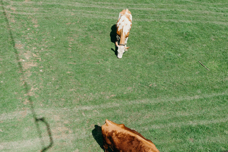 High angle view of dog running on field