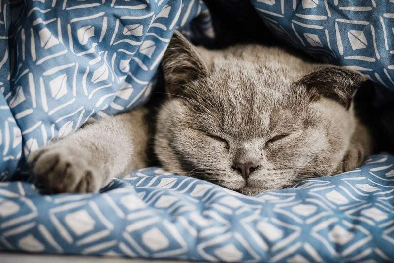 So tired EyeEm Selects Animal Animal Themes One Animal Cat Pets Mammal Domestic Cat Relaxation Sleeping Eyes Closed  Bed Indoors