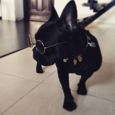 Say what? :) Frenchie Fab_frenchies Frenchbulldog Blackissuchahappycolor Weliketoparty Instamood Instapic