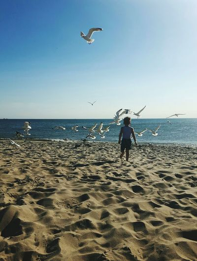 Noordzee Noordzeestrand Meeuwen Seagulls And Sea Toddler  Toddlerlife Toddler Playing Toddler Running Young Boy Child Playing At The Beach Children Photography Child Playing Child Running On Beach Bird Water Flying Sea Beach Clear Sky Full Length Spread Wings Sand Mid-air
