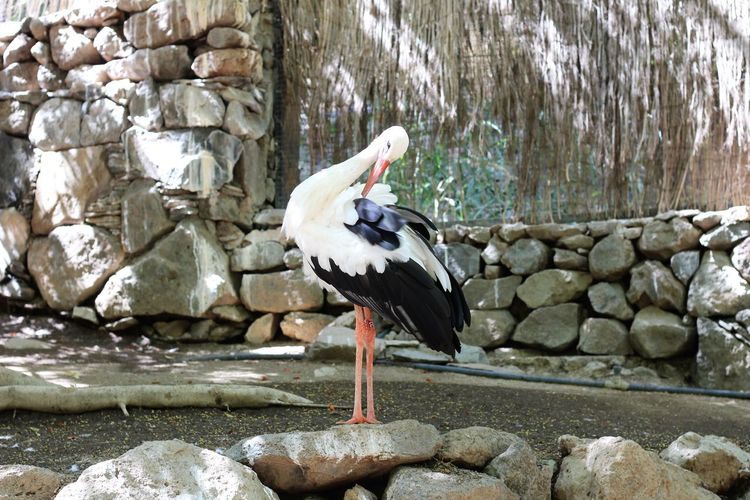 Side view of bird perching on rock