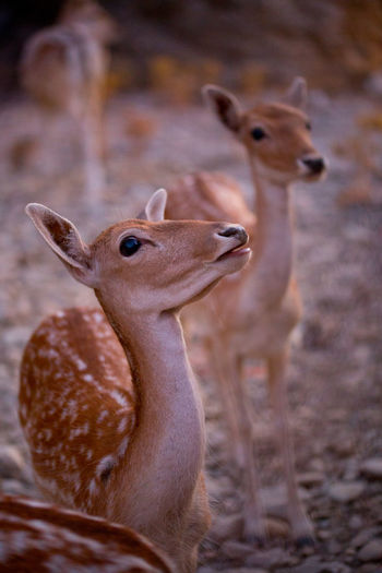 Animals In The Wild Animal Themes One Animal Nature Mammal Animal Wildlife Deer Waiting For Lunch
