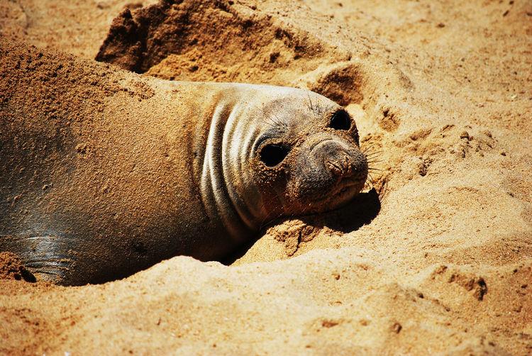 Elephant seal on the beach